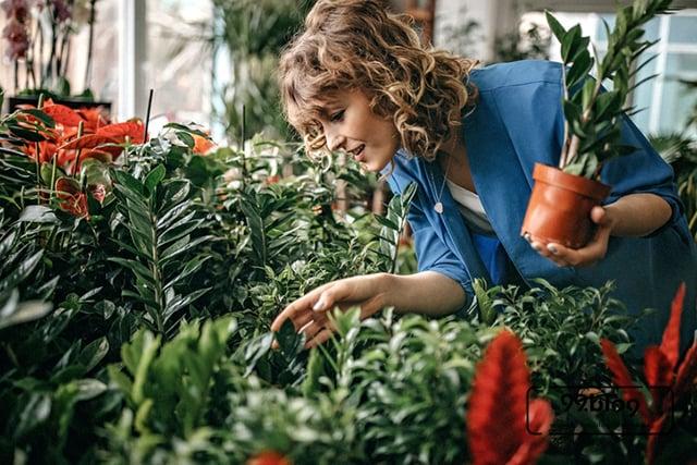 memelihara tanaman