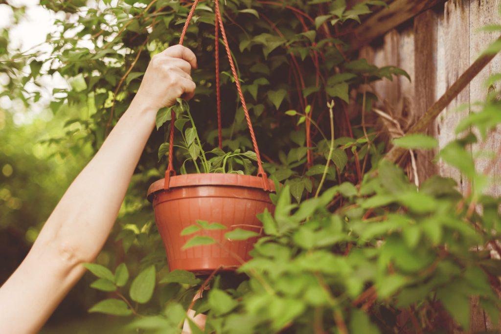 kebun sayur gantung