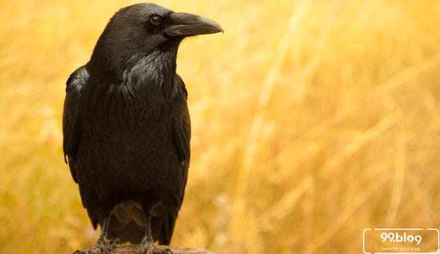 Hati-Hati, 5 Jenis Burung ini Disebut Pembawa Rezeki Sekaligus Kematian!
