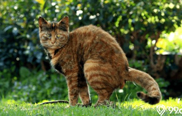 cara menghilangkan bau kotoran kucing