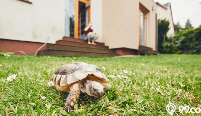 6 Cara Memelihara Kura Kura di Rumah untuk Pemula, Gampang Banget!