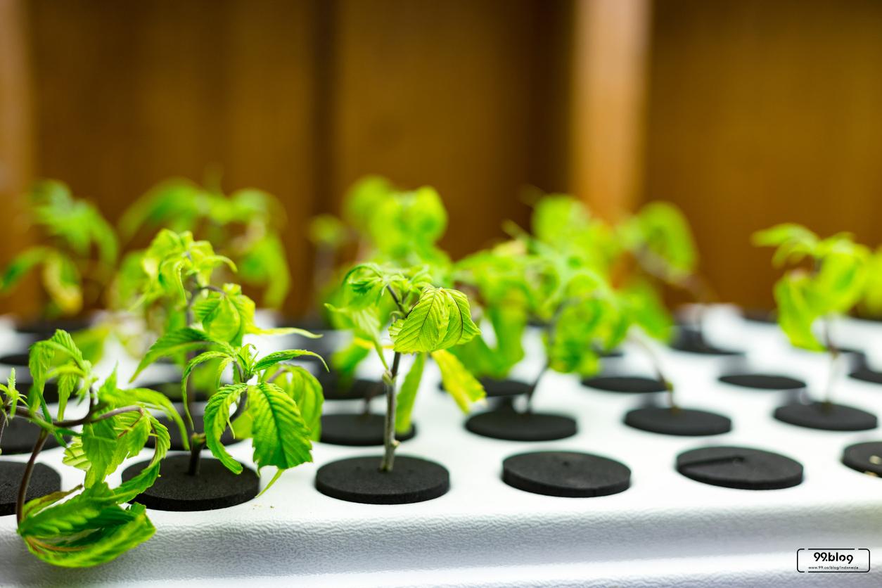 13 Peluang Usaha Pertanian Di Rumah Cepat Untung Dan Mudah