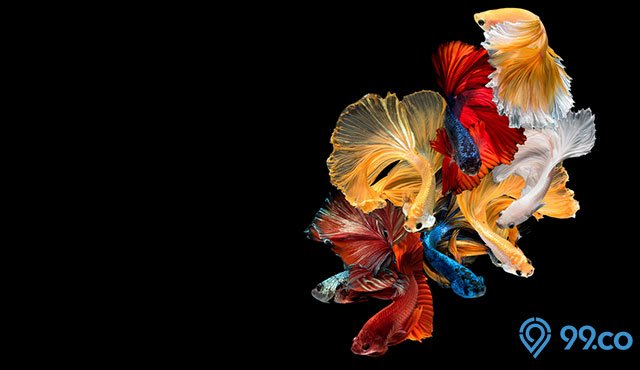 13 Jenis Ikan Hias Cantik Paling Populer yang Mudah Dipelihara | No.6 Unik Banget!