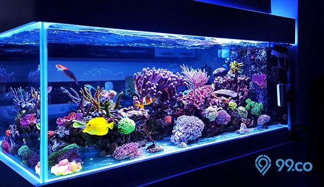 12 Ikan Hias Air Tawar Yang Bisa Dicampur Dalam Akuarium Yang Sama