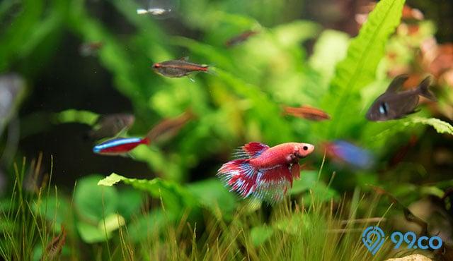 10 Ikan Hias Kecil Tercantik yang Mudah Dipelihara   Harganya Mulai dari Rp1.000 Saja!