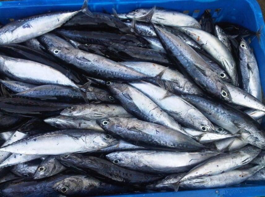 8 Ikan Laut Indonesia Yang Sering Dikonsumsi Lezat Kaya Manfaat