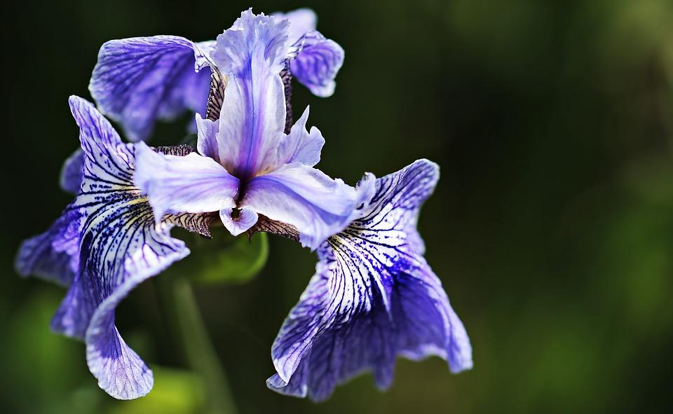macam macam bunga