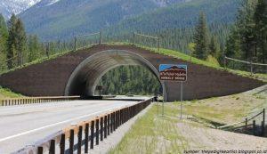jembatan untuk hewan