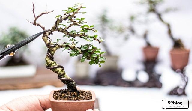10 Jenis Tanaman Bonsai Terbaik untuk Menghiasi Rumah | Plus Tips Perawatan