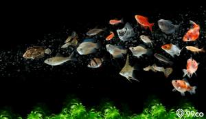 jenis ikan aquascape terbaik