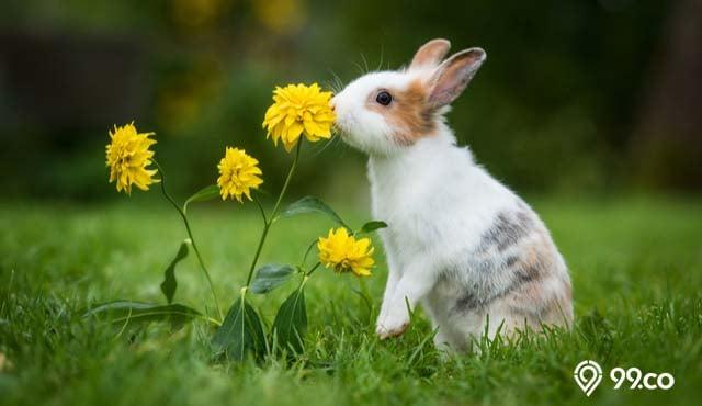jenis jenis kelinci peliharaan