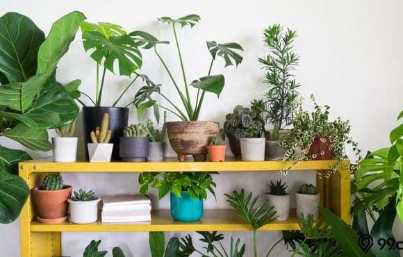 jenis tanaman hias termahal