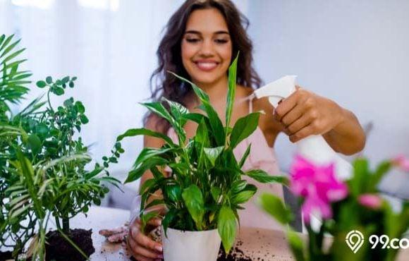 jenis tanaman suci