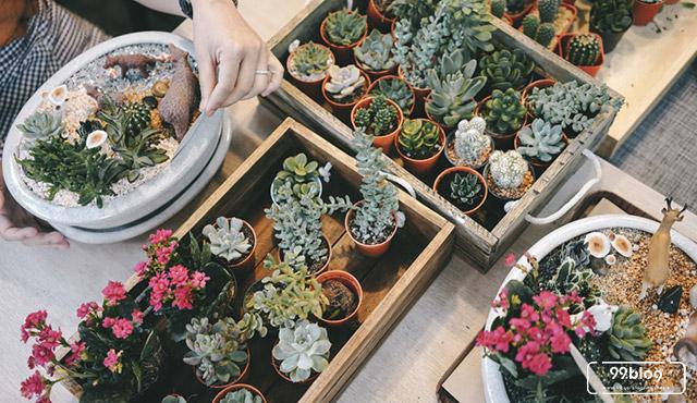 7 Kaktus Hias Mini yang Cocok Dirawat Pemula. Tahan Banting!