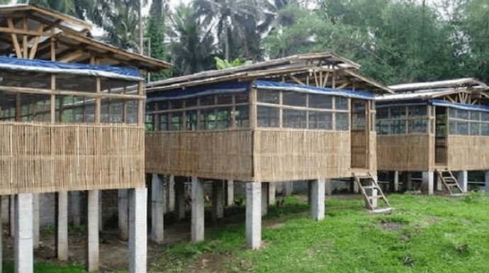 Cara Ternak Ayam Potong Rumahan yang Keuntungannya Menggiurkan