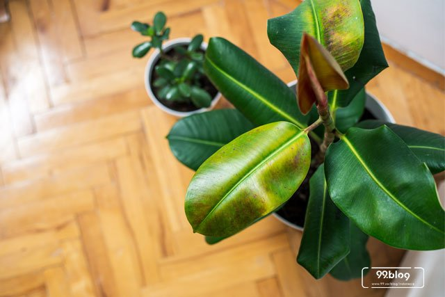 tanaman dalam rumah untuk kesehatan
