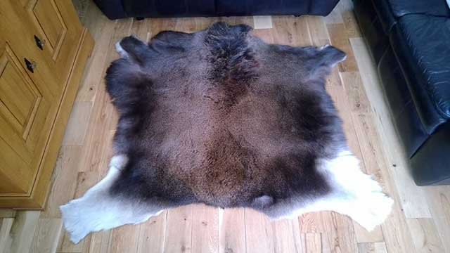 karpet bulu hewan