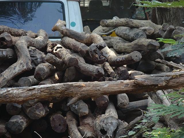 kayu termahal