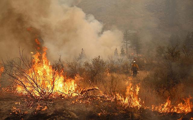 kebakaran hutan terbesar di duni