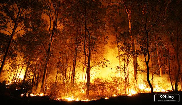 Selain Riau & Kalimantan, Ini 5 Kebakaran Hutan Terbesar di Dunia
