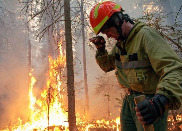 kebakaran hutan terbesar di dunia