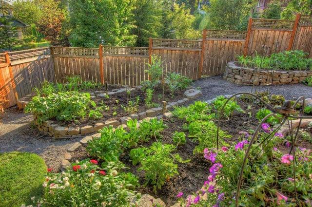 kebun sayur di pekarangan rumah