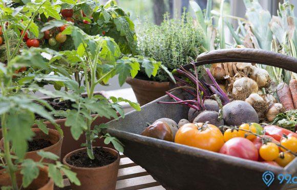 kebun sayur di rumah