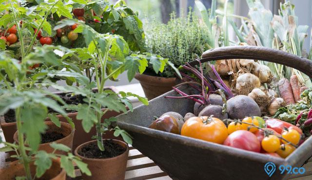 Jangan Sembarangan Menanam! Ikuti Tips Berikut untuk Membuat Kebun Sayur di Rumah