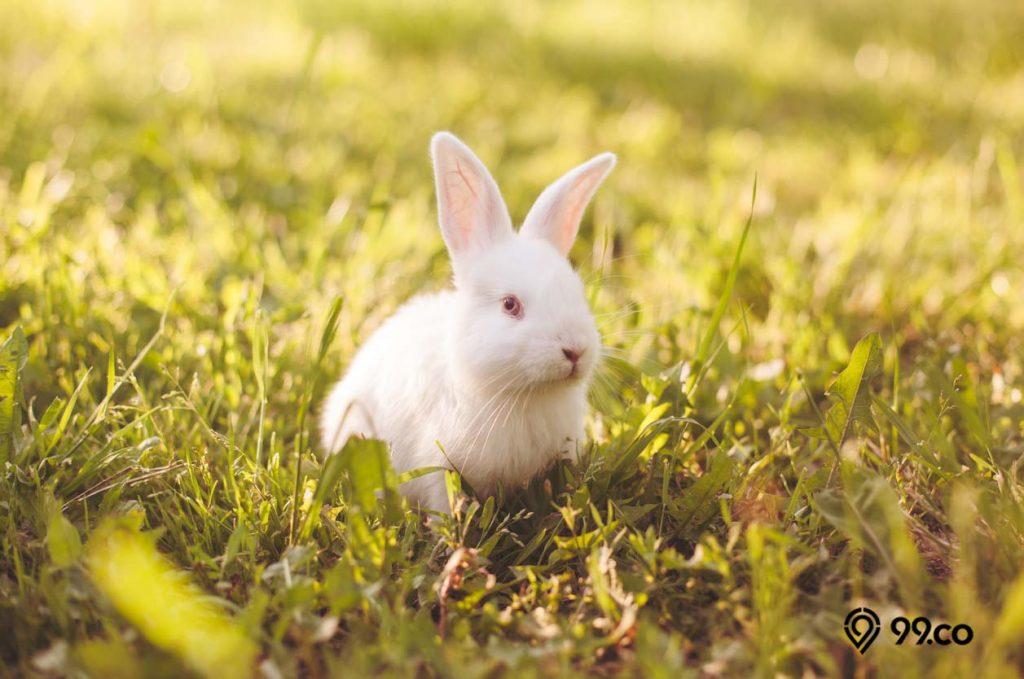 kelinci putih yang lincah