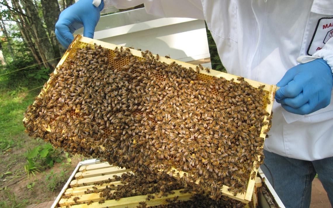 keuntungan budidaya lebah