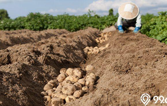 kisah petani sukses