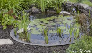 6 ide desain kolam ikan depan rumah untuk memunculkan