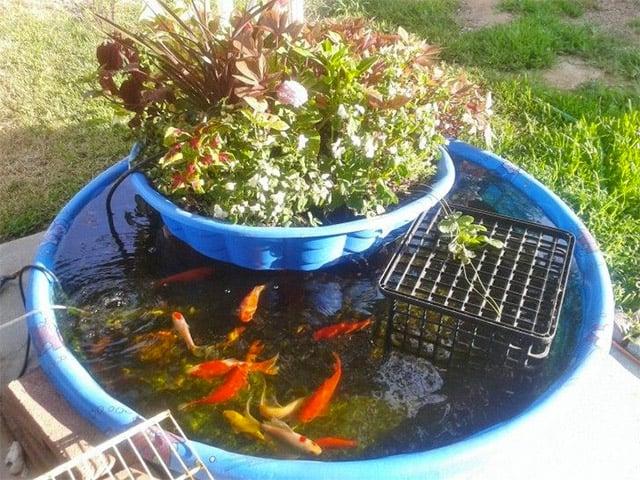 kolam ikan portable
