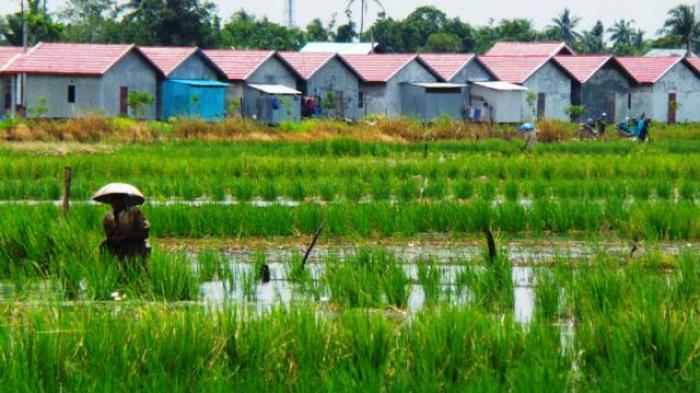 penggunaan lahan sawah