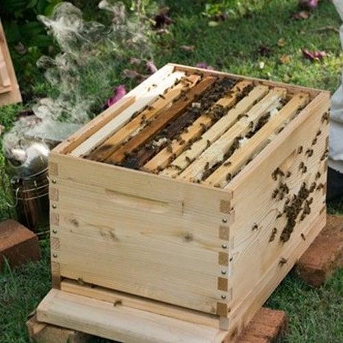 kotak lebah