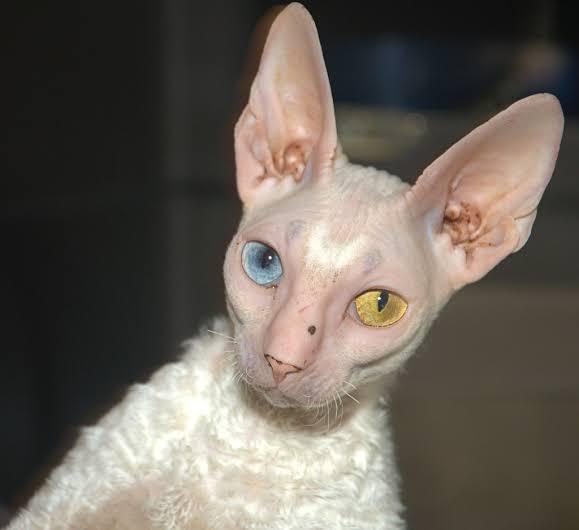 kucing unik di dunia