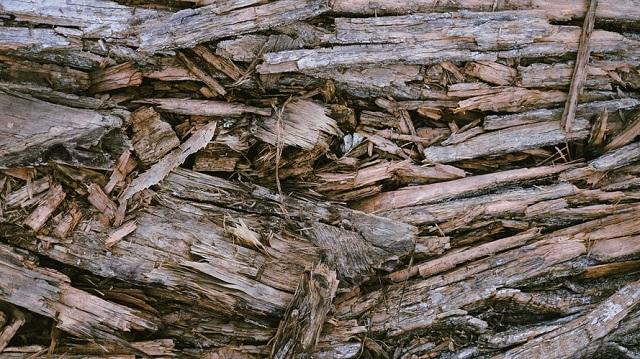 kayu lapuk