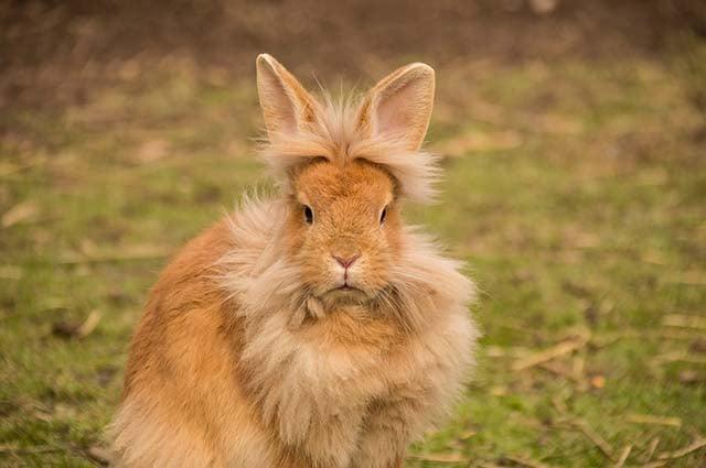 lion rabbit
