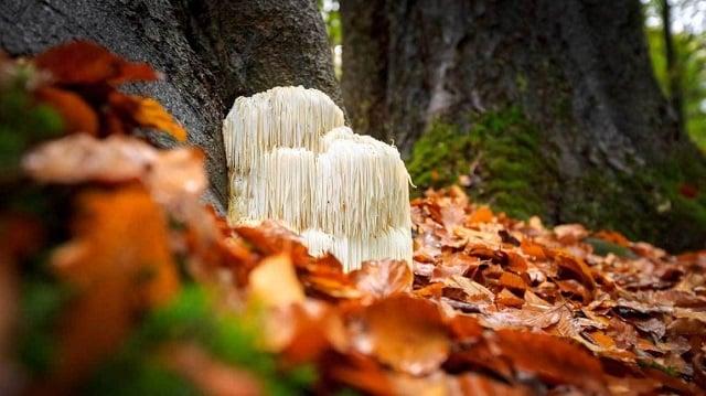 jamur yang bisa dimakan