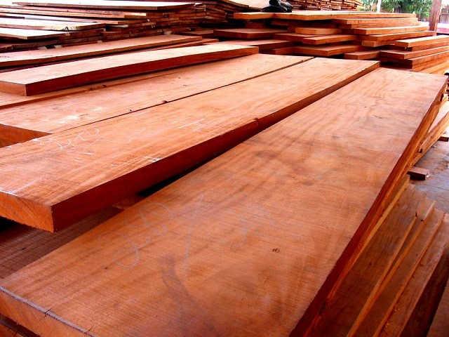 kayu eksotis Indonesia
