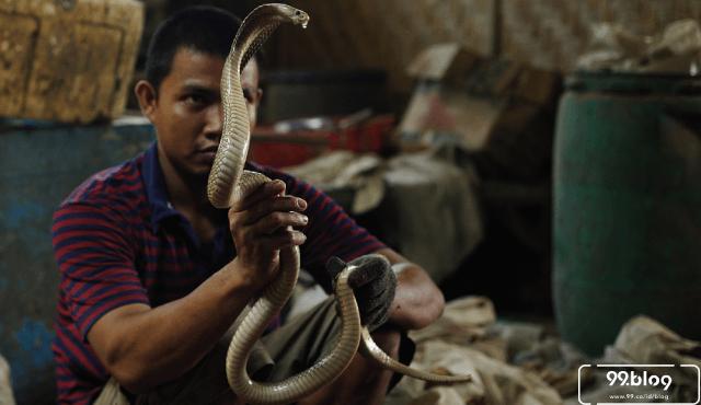 13 Makanan Ekstrim Di Indonesia Paling Populer Berani Coba