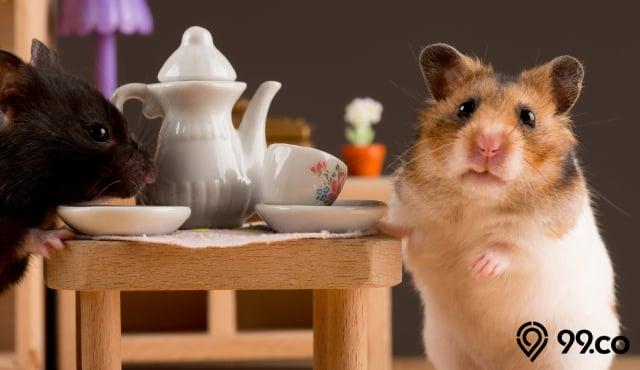 10 Rekomendasi Makanan Hamster Alami yang Bernutrisi, Aman & Menyehatkan