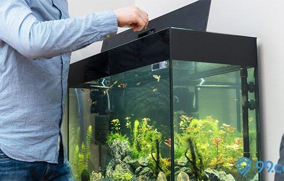 akuarium ikan hias