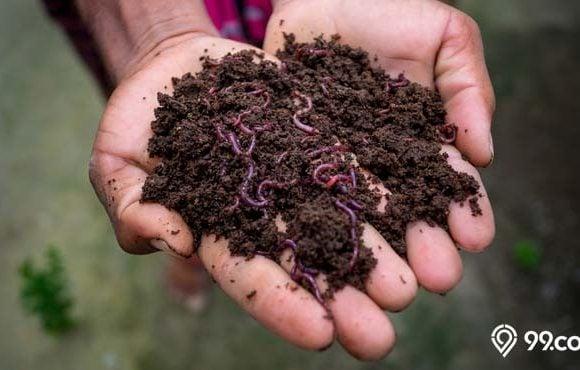 manfaat cacing tanah