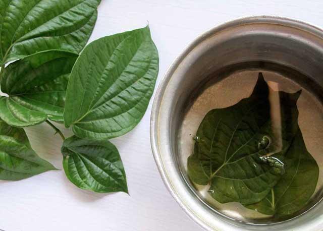 cara mengolah daun sirih