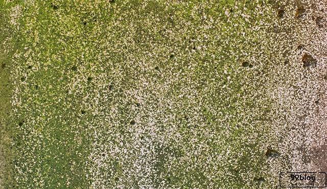 Jarang Tahu, Ini 8 Manfaat Lumut yang Menempel di Dinding Rumah