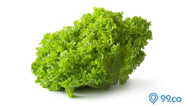 sayuran selada