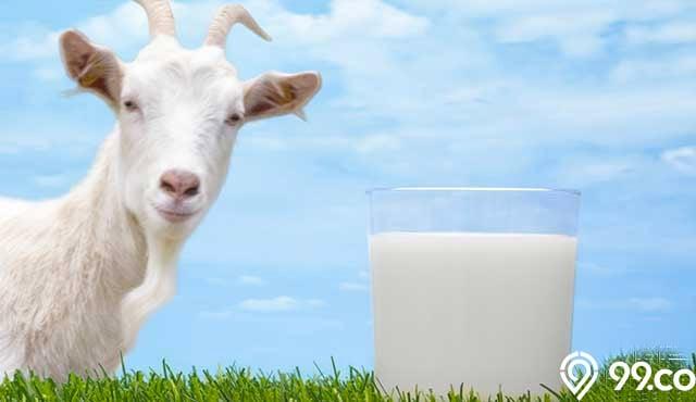 susu mengandung kalsium tinggi