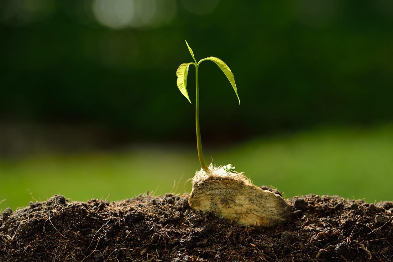 bibit tanaman