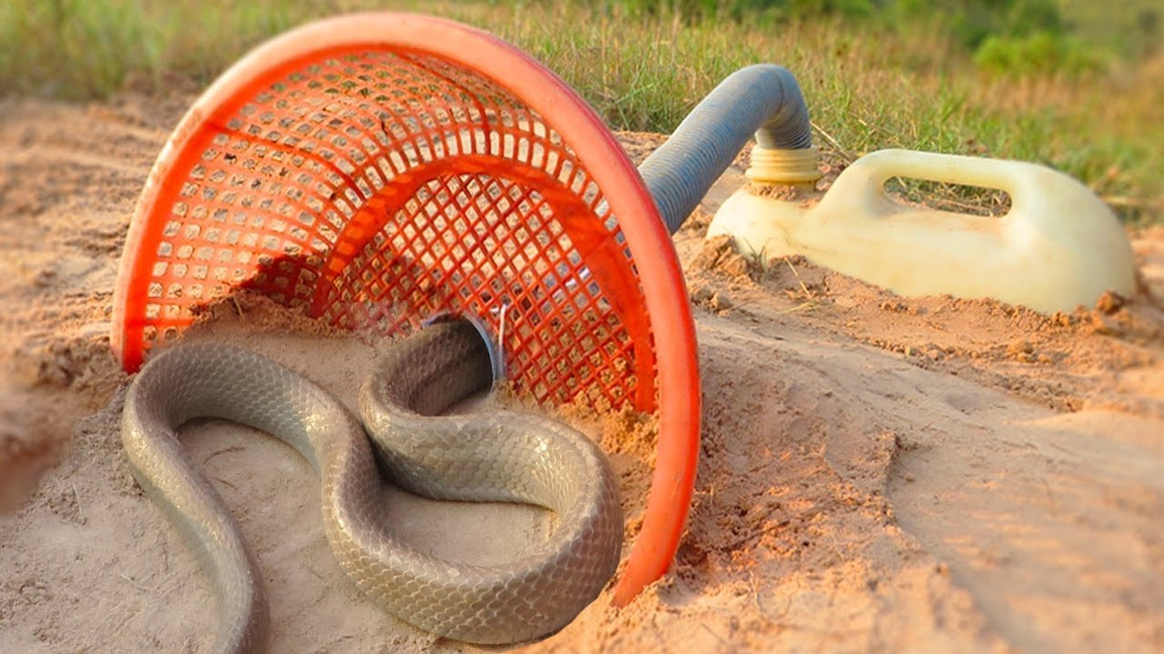 perangkap ular